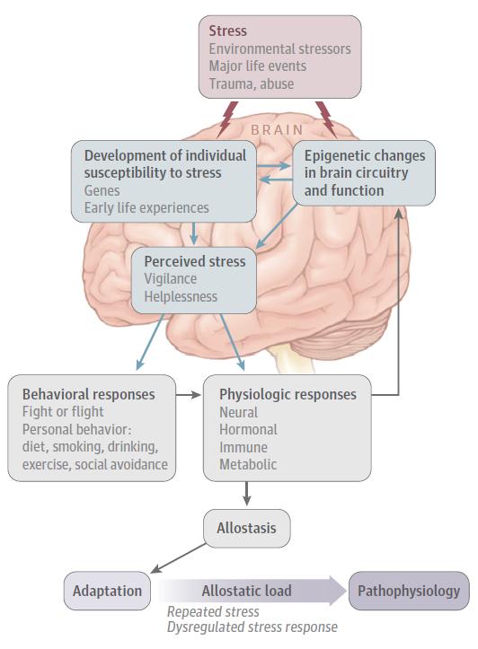 El cerebro y el estrés - Artículos - IntraMed