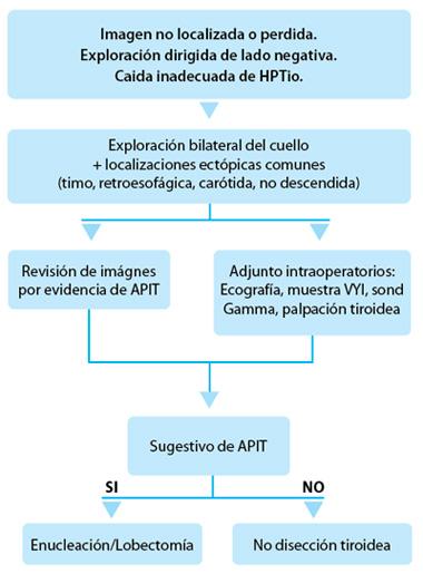 Glándulas paratiroides intratiroideas - Artículos - IntraMed