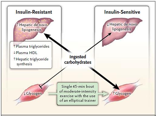 Lípidos ectópicos, resistencia a la insulina y enfermedad